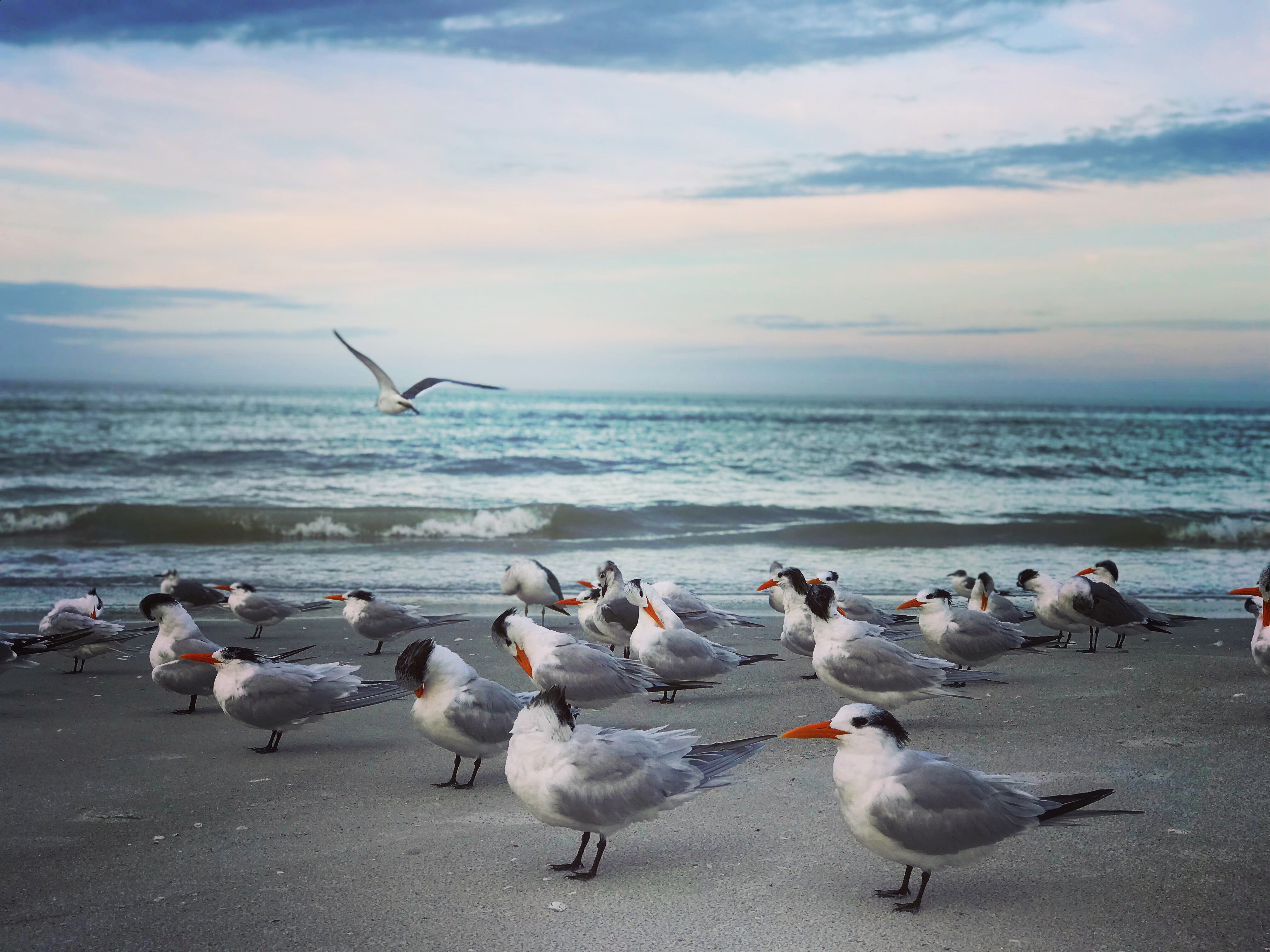 5 Things You Might Not Know About St. Pete Beach, Florida