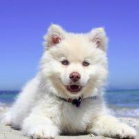 St Pete Beach dog beach